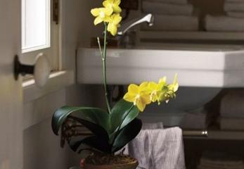Цветок для ванной комнаты